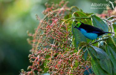 7V4A1289-Editar-Editar-210618-Albatross-Birding-And-Nature-Tours