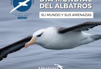 Día del Albatros_Mesa de trabajo 1-01