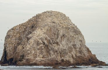 Peña-Blanca-Editar-Editar-270416-Birding-Natural-History-Chile